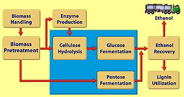 Biomass Flow Diagram Wiring Diagram Master Blogs